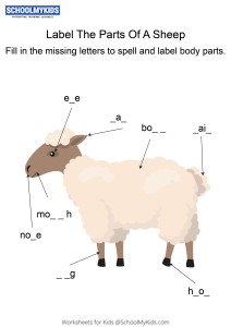 Labeling the parts of a Sheep - Sheep body parts fill in the blanks