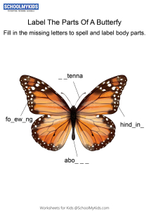 Labeling the parts of Butterfly - Butterfly body parts fill in the blanks