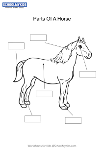 Label and color the parts of a Horse