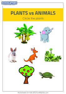 Plants or Animals