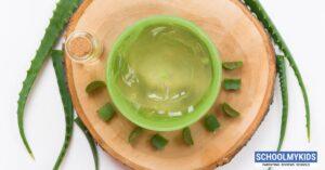 एलोवेरा में हैं ढेरों गुण : घरेलू नुस्खे, फायदे – Aloe Vera Ke Fayde in Hindi