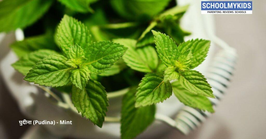 पुदीना के 10 घरेलू नुस्खे और फायदे: करे त्वचा से लेकर पेट तक का उपचार – Home Remedies and Uses Mint Pudina in Hindi