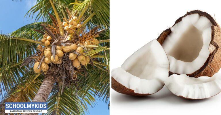 नारियल में हैं बहुत गुण – नारियल के  फायदे और उपाय – Nariyal Ke Fayde in Hindi